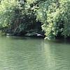 A heron taking flight along the river.