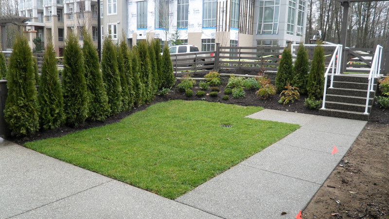 Grass and cedars taking root and extra plantings.