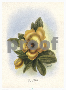 135: Ted Mundorff -- 'Cup of Gold' Floral Airbrush Art Print, ca 1940-1950. (PROOF watermark will not appear on your print)