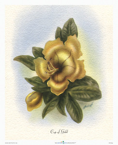 135: Ted Mundorff -- 'Cup of Gold' Floral Airbrush Art Print, ca 1940-1950.