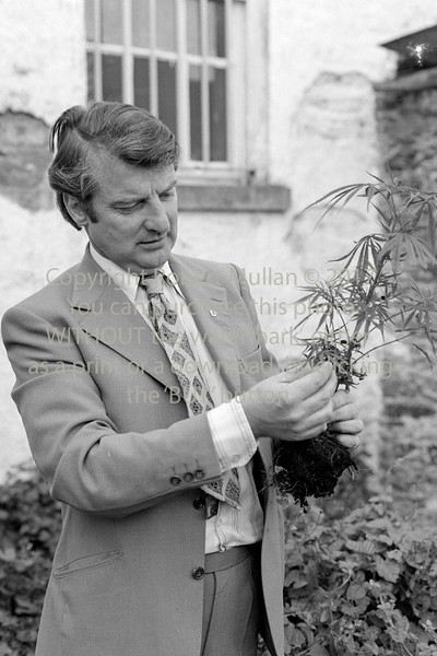 Det Garda Eugene Hughes with a marijuana plant.  Early 1980s