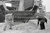 Woodchip at Wicklow port.  Circa 1980s