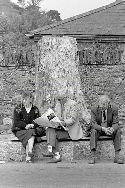 The 'Big Tree' Wicklow - 1980s/90s