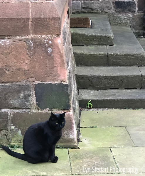 A resident cat in Dean Village, Edinburgh