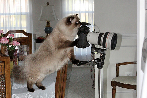 Cat Photographers and a few other things