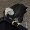 Eagle center