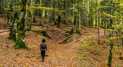 Paseando por la Selva de Irati
