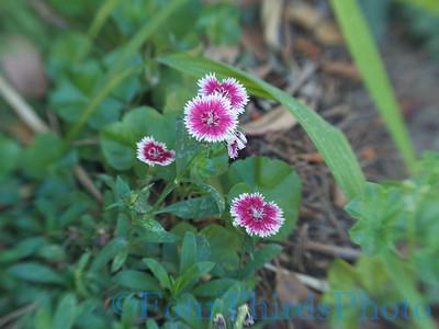 Lens Baby compsoer - Flower shots