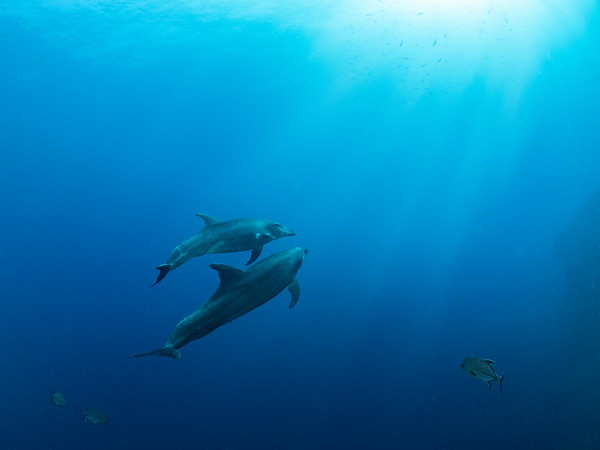Dolphin Smiles
