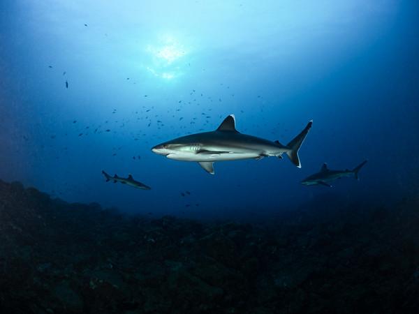 Sharky Water
