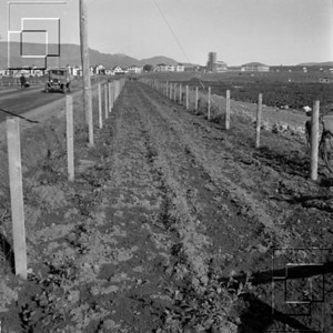 1944-horftiattaðLaugarneshverfiogteigum-sennilfraBorgartuni