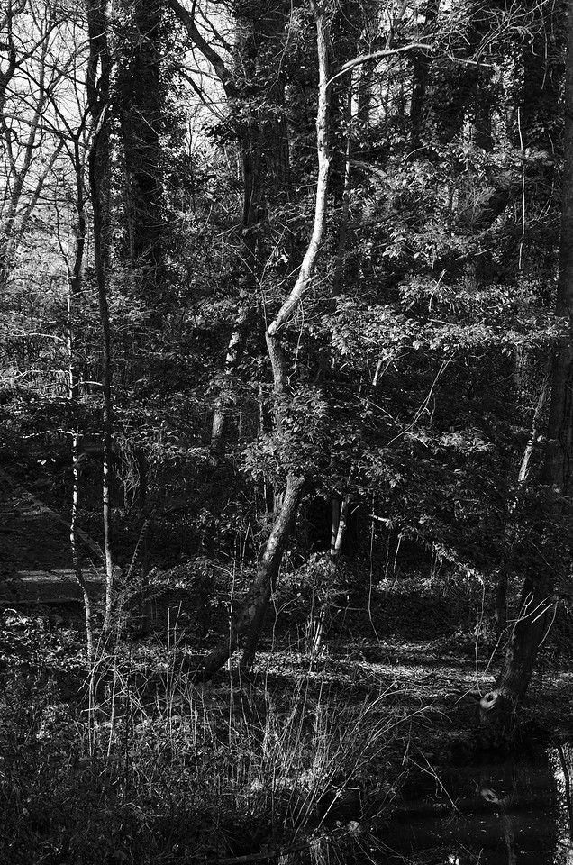 Reynolda Gardens Trees #8