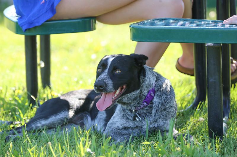 Rez Dog Rescue - Nathan Satran