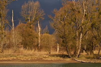 Ein Gewitter kommt - Baumstrukturen im Winter, Altrhein - Naturschutzgebiet Bremengrund - Rheinstetten, Deutschland