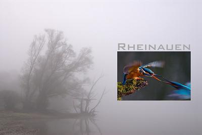 Titelbild Rheinauen-Multivision  mehr dazu im Blog: Termine Rheinauen