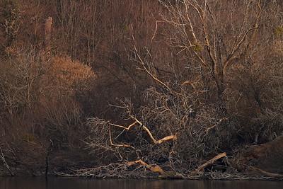 Umgestürzter Baum am Fermate bei Rheinstetten, Deutschland