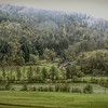 Living in the Black Forest
