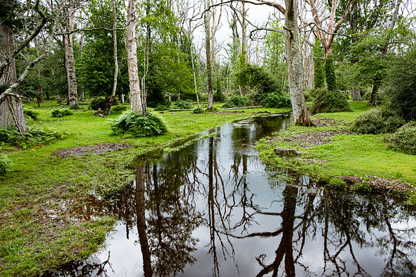 New Forest-3675
