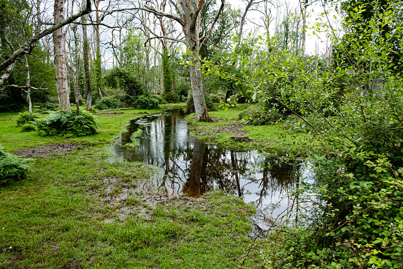 New Forest-3673