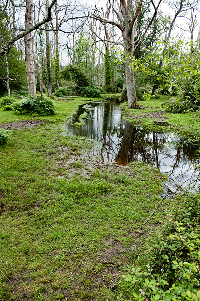 New Forest-3671
