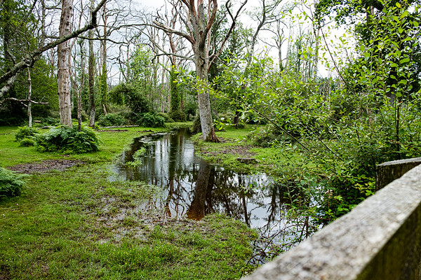 New Forest-3672