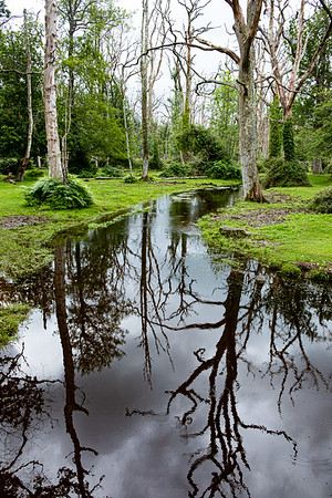 New Forest-3674