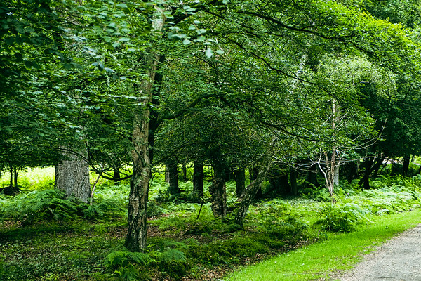 New Forest-3645
