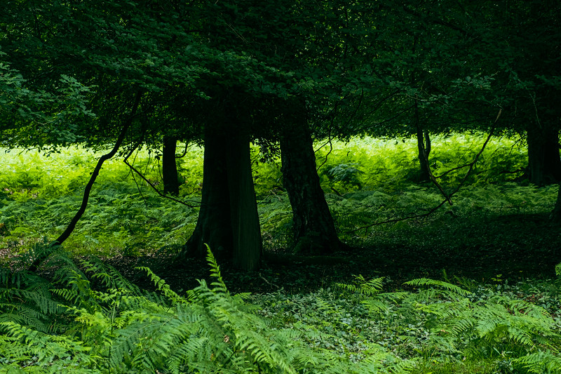 New Forest-3646