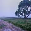 Morning fog, Newport, Rhode Island