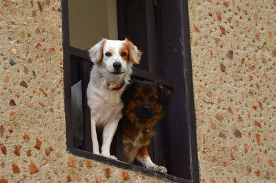 Dogs in the window, Rhodes.