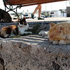 Stray cats of Mandraki Harbor.