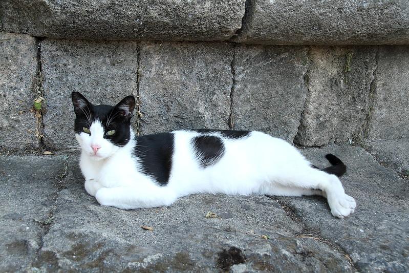Another stray cat lounding around.
