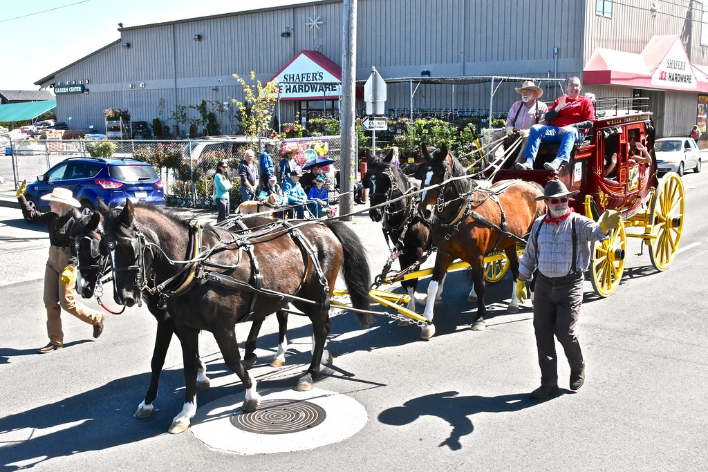 . The Wells Fargo horses clop down Henderson Street in regal fashion. (Jose Quezada - For the Times-Standard)