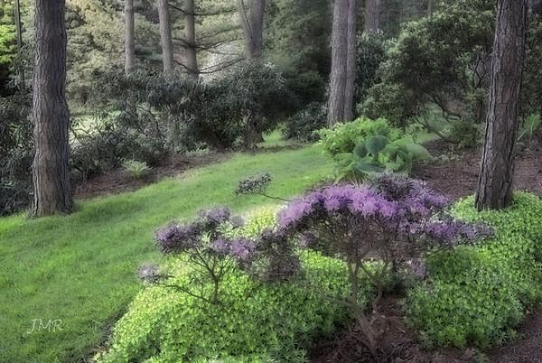Brueckner Rhododendron Gardens - 2012