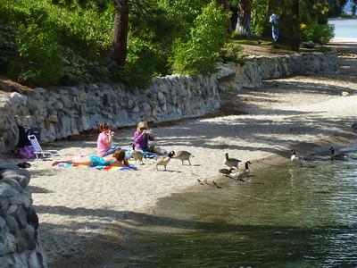 Lake Tahoe2013 Sugar Pine Pt 16