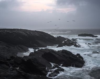 Gaviotas luchando contra el viento. Ribadeo