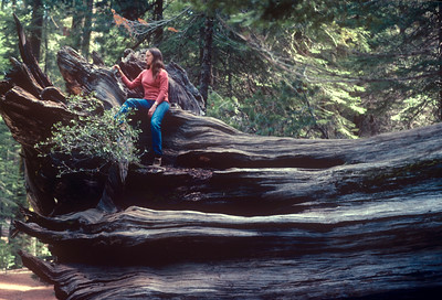 1980-05 Mariposa Redwood Grove CA Honeymoon-2