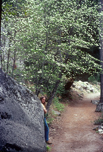 1980-05 Mariposa Redwood Grove CA Honeymoon-3