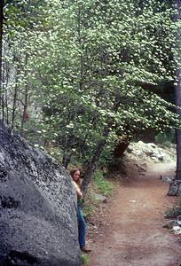 1980-05 Mariposa Redwood Grove CA Honeymoon-3