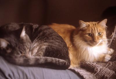 1987-04 Cassie & Red