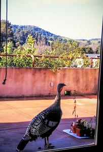 1993-03 Wild Turkey
