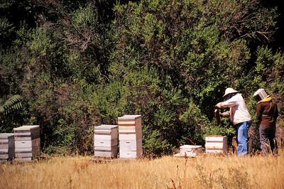 1995-06 Steve's Bees-1