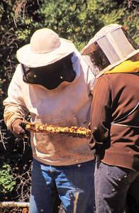 1995-06 Steve's Bees-3