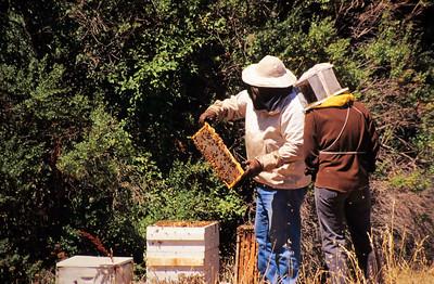 1995-06 Steve's Bees-2