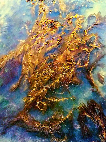 Kelp Abstract, Fisherman's Wharf Monterey