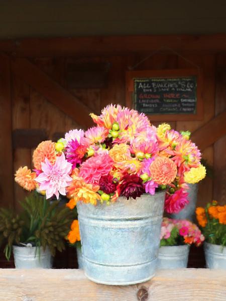 Carmel Valley Flowers