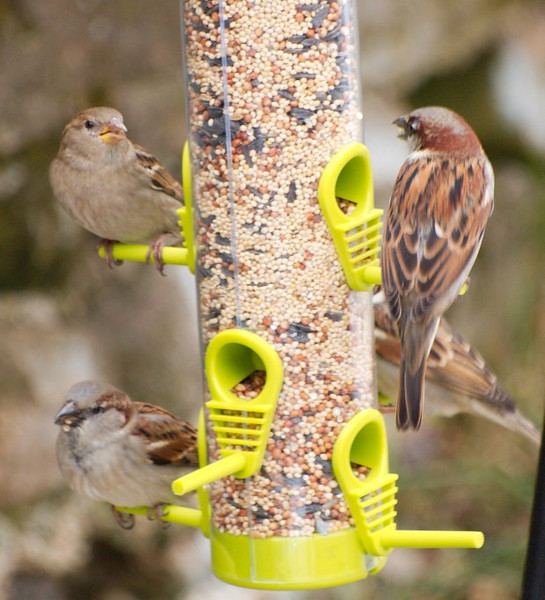 Din-Din Time <br /> Family dining on my new feeder.
