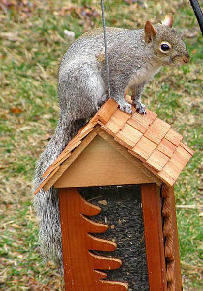 The Infamous Olga D. Squirrel