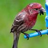 Sloppy Finch