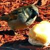 Little Bird at ShopRite in Brodheadsville